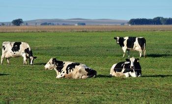 Financiarán proyectos para mejora genética bovina en tambos