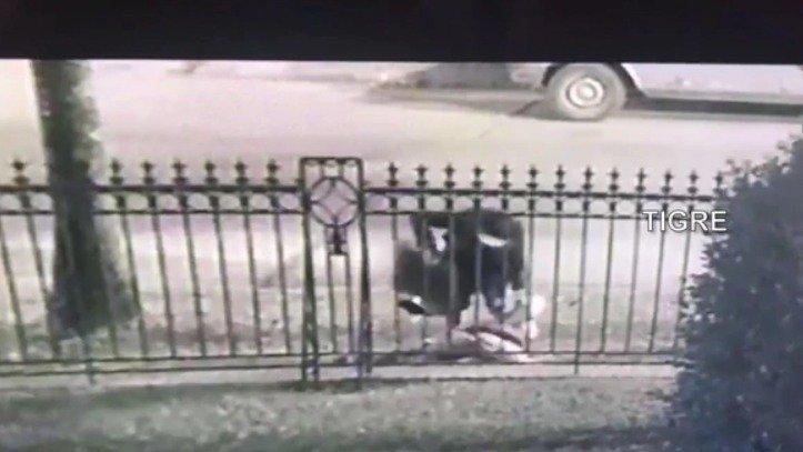 En una entradera, jóvenes ladrones mataron a golpes a una abuelita