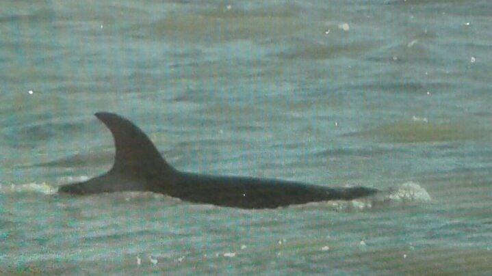 Apareció una orca en Monte Hermoso