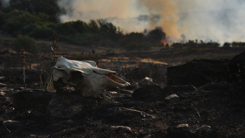 Estiman que el incendio en las sierras dejó alrededor de 700 vacas muertas