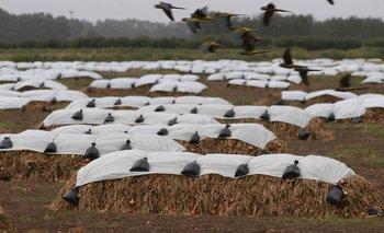 La cebolla logra resurgir de las cenizas tras una campaña sin lluvias en precosecha