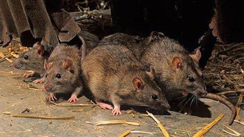 San Martín de los Andes: los 3 casos sospechosos de hantavirus dieron negativo