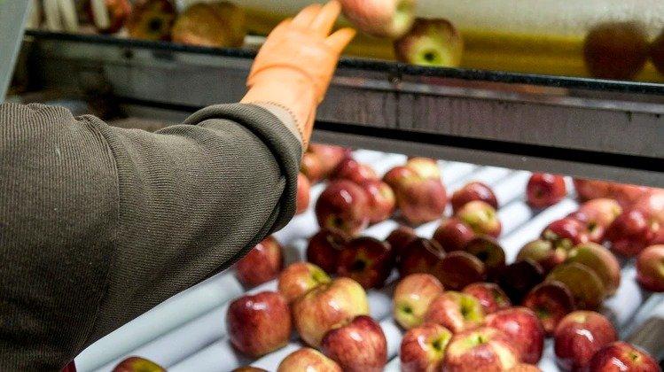 Brasil cerró por tiempo indeterminado el ingreso de manzanas y peras argentinas