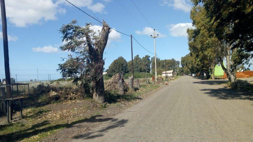 San Blas: malestar por la tala de eucaliptus centenarios